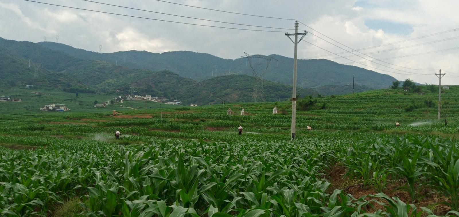 中村乡水稻农作物病虫害统防统治为种田农民撑起保护伞