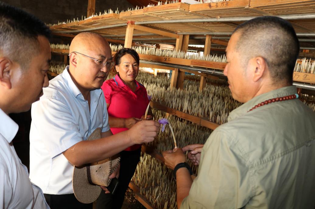 州人大常委会副主任陈俊明到塔城镇调研乡村振兴工作及挂钩企业发展情况